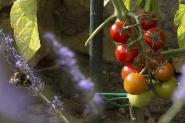 (AL-44) plodovi u vrtu